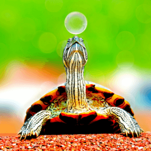 Broască țestoasă