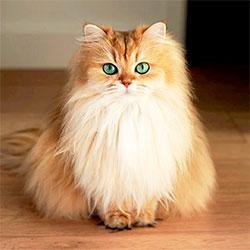 Katzenmensch